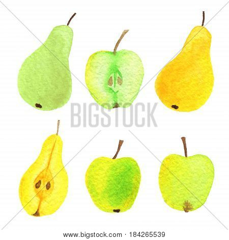 Vector watercolor apples, pears, half an apple and half and pear on white paper. Juicy elegant apples and pears.