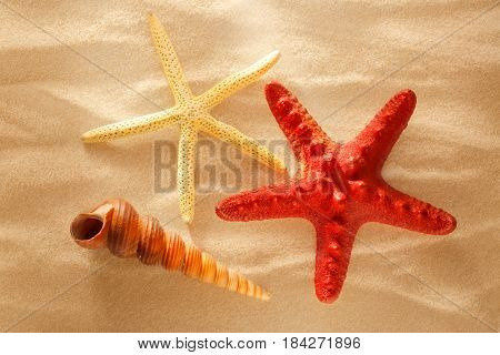 Sea Shell And Stars