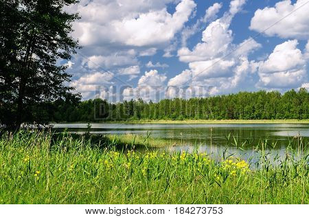 Summer water landscape - waters of Valdai lake in Russia in summer sunny day. Rural summer landscape view of forest lake and green summer forest trees in sunny summer weather. Summer nature landscape with beautiful clouds and lake in the forest