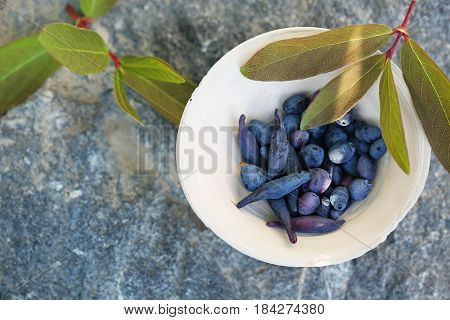 Blue berries of honeysuckle in a bowl