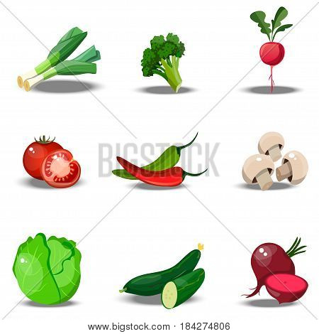 Very high quality original trendy vector set with fresh healty vegetables. Summer agriculture design. paprika, leek, tomato, champignon, cabbage, cucumber, beet, radish