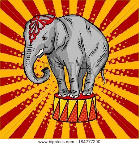 Circus elephant on pedestal pop art retro vector illustration. Comic book style imitation.