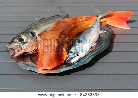 Gurnard, mackerel and horse mackerel on a pewter dish