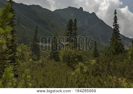 Sunlit mountain top overgrown with coniferous forest and glade on the ecological walk toward   Maliovitza peak in Rila mountain, Bulgaria