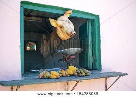 Pig Head Hanging in Shop Window - Trinidad, Cuba