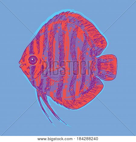 Graphic aquarium fish concept with hand drawn great discus on light background isolated vector illustration