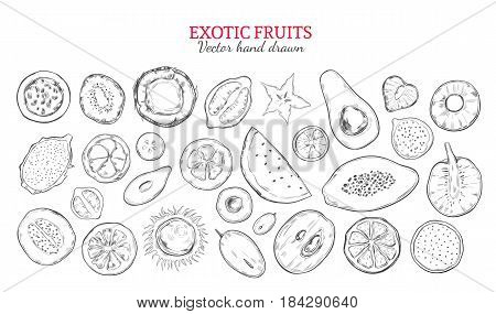 Exotic fruits and tropical berries set in monochrome hand drawn style isolated vector illustration