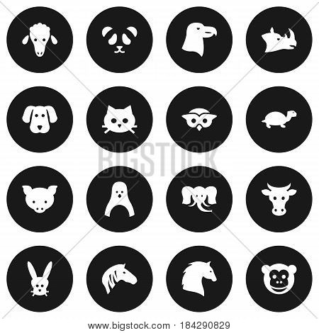 Set Of 16 Alive Icons Set.Collection Of Tortoise, Kine, Pussy And Other Elements.