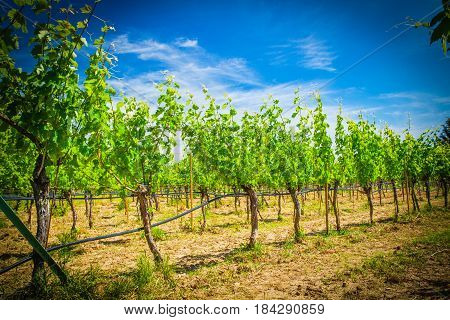 a beautiful view of the  vineyard landscape