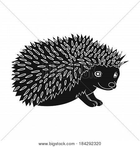 Hedgehog.Animals single icon in black style vector symbol stock illustration .