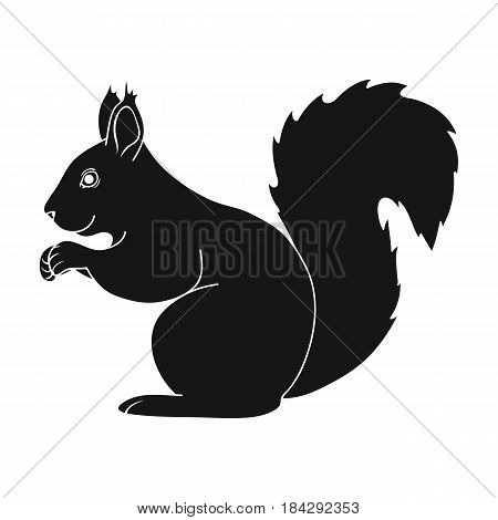 Squirrel.Animals single icon in black style vector symbol stock illustration .