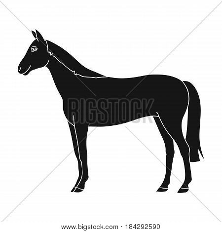 Horse.Animals single icon in black style vector symbol stock illustration .