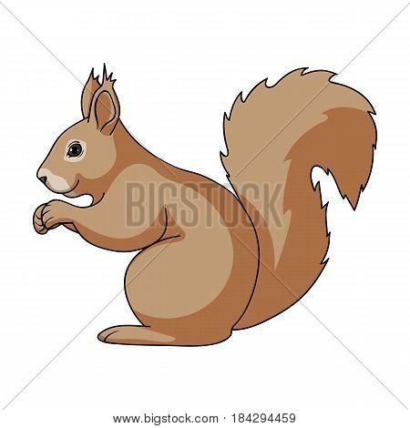 Squirrel.Animals single icon in cartoon style vector symbol stock illustration .