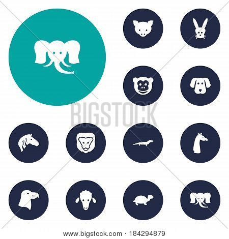 Set Of 12 Beast Icons Set.Collection Of Camelopard, Aquila, Wildcat And Other Elements.