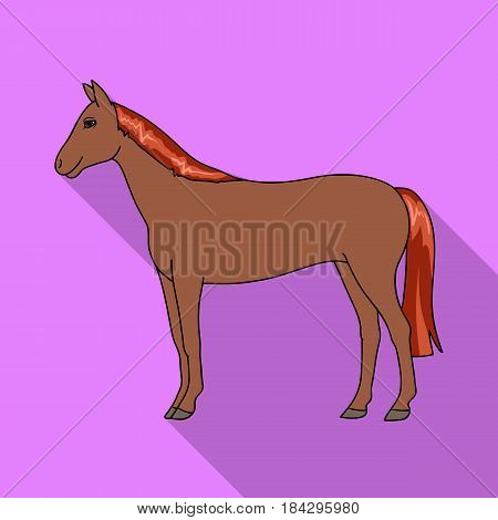 Horse.Animals single icon in flat style vector symbol stock illustration .