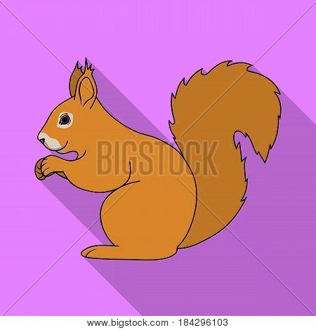 Squirrel.Animals single icon in flat style vector symbol stock illustration .