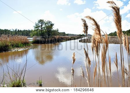 Summer heat blasts the marsh and all the life there in.