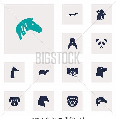 Set Of 12 Alive Icons Set.Collection Of Gecko, Aquila, Steed And Other Elements.