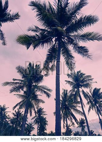 Coconut trees silhouette in the sunset,in Asia