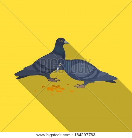Pigeon.Old age single icon in flat style vector symbol stock illustration .
