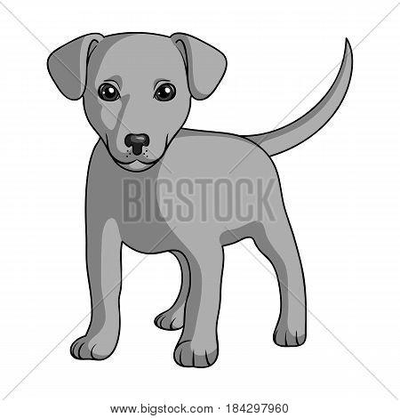 Puppy labrador.Animals single icon in monochrome style vector symbol stock illustration .