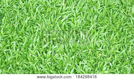 Grass Background Green Lawn