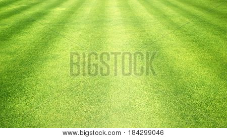 Grass Background Green Lawn