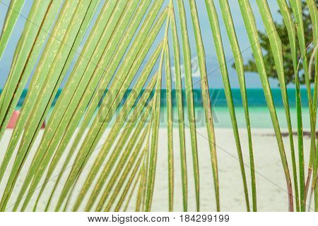 great amazing closeup view of palm tree leaf against tropical beach and turquoise ocean background
