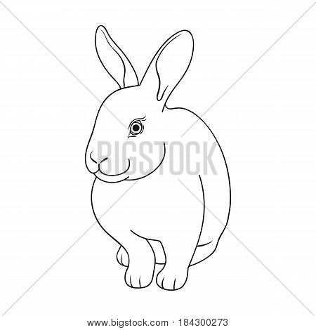 Gray rabbit.Animals single icon in outline style vector symbol stock illustration .