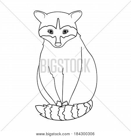 Raccoon.Animals single icon in outline style vector symbol stock illustration .
