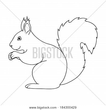 Squirrel.Animals single icon in outline style vector symbol stock illustration .