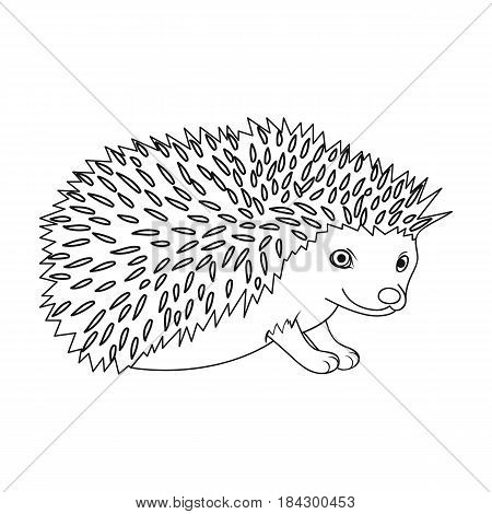 Hedgehog.Animals single icon in outline style vector symbol stock illustration .