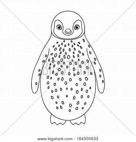 Penguin.Animals single icon in outline style vector symbol stock illustration .