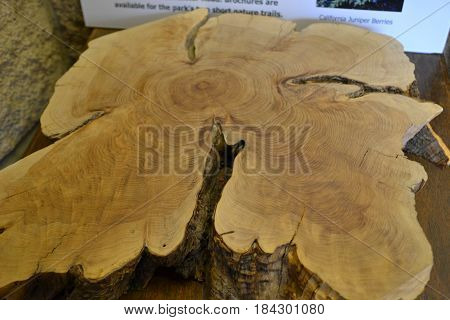 Top of a large tree trunk. rings, cracks and cavities can easily be seen