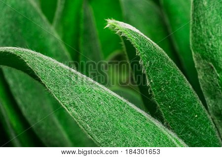super macro green leaves or grass texture