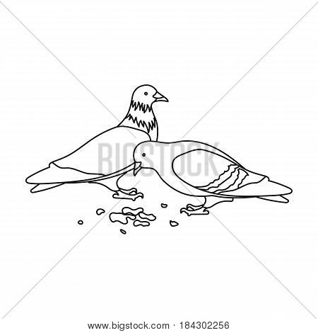 Pigeon.Old age single icon in outline style vector symbol stock illustration .