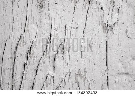 old black and white wooden background with knots texture severed tree