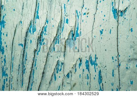 old black blue and white paint wooden background with knots texture severed tree