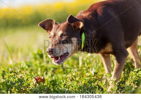 Mixed Breed Dog On The Meadow