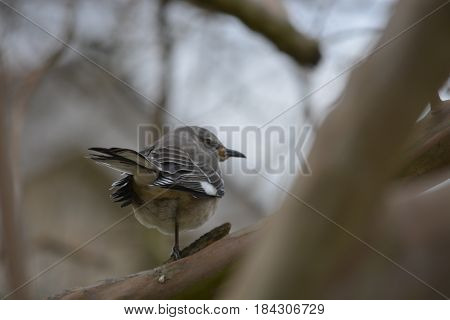 autumn beauty, bird standing in a leafless tree