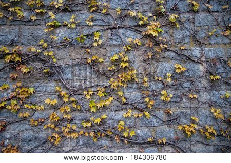 texture brick wall with beautiful background plant