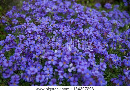 Blue flowers seamless background pattern. High resolution
