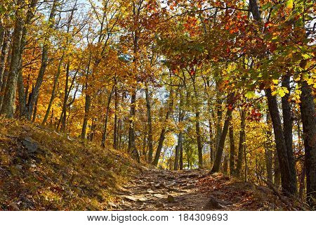 Appalachian trail in autumn in West Virginia USA. Sun paves the way of a rocky mountain terrain.