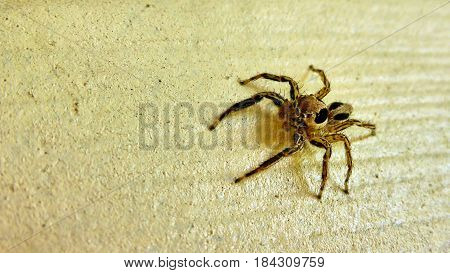 Small Spider Sits On The Wall