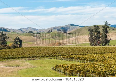 New Zealand countryside with vineyards in autumn