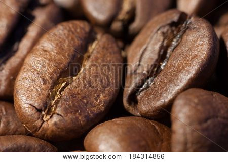 Two brown roasted coffee beans close-up macro view natural food background selective focue shallow depth of field.