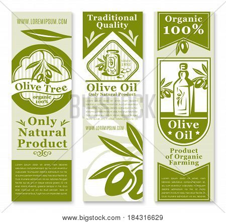 Olive oil and fruit banner template. Green branches of olive tree with fruit and leaf, bottle of oil and table olives jar symbols with ribbon and star for organic farm products packaging label design