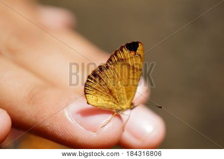 A child's hand holding up a yellow butterfly