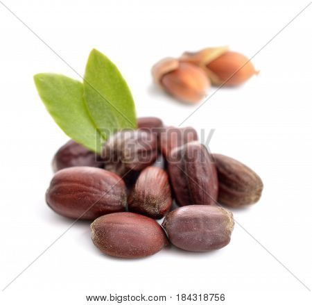 Jojoba (Simmondsia chinensis) leaves with seeds. Isolated on withe background.