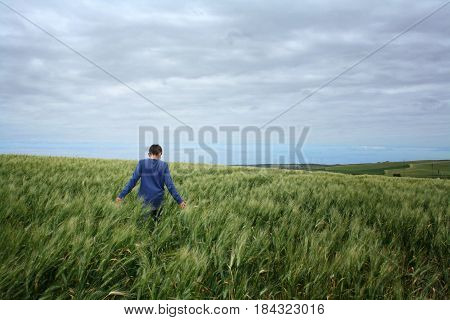 the boy in the blue sweater in the wheat field